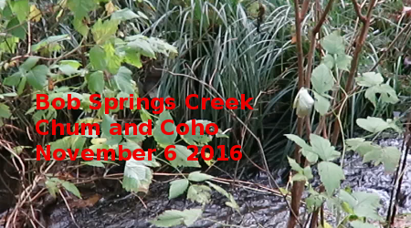 Link to Bob Springs Creek Chum and Coho 2016 Video