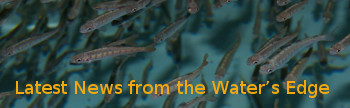Fish image with words: Latest News from the Water's Edge